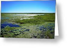 Paynes Prairie View Greeting Card