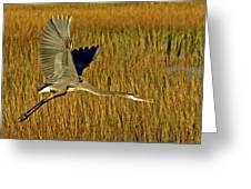 Pb296601 Great Blue Heron Greeting Card