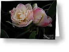 Pe0ny Tulip Duet 2 Greeting Card