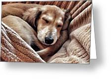 Peace At Last #saluki Greeting Card