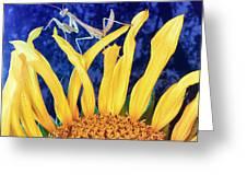 Peace Brings Death Greeting Card