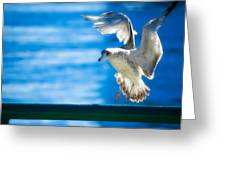 Peace Gull Greeting Card
