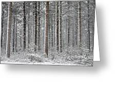 Peace In The Woods Greeting Card by Catherine Reusch  Daley