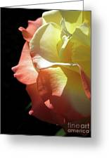 Peace Rose 2 Greeting Card