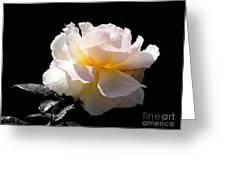 Peace Rose Inner Light Greeting Card