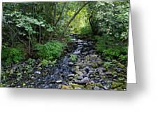 Peaceful Flowing Creek Greeting Card