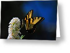 Peaceful Moment Greeting Card