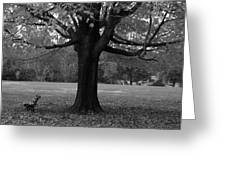 Peaceful Park Greeting Card