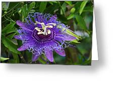 Peaceful Passion Greeting Card