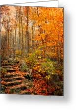 Peaceful Pathway Greeting Card by Kathy Jennings