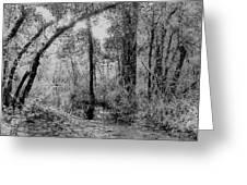Peaceful Trees Greeting Card