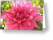 Peacefully Pink At Dawn Greeting Card