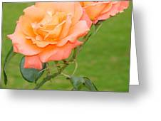 Peach And Gold Roses Greeting Card