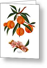 Peach And Peach Blossoms Greeting Card