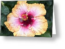 Peach And Pink Greeting Card