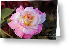 Peach And White Rose Greeting Card