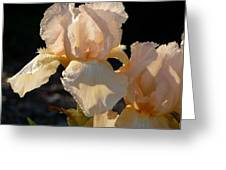 Peach Bearded Iris Greeting Card
