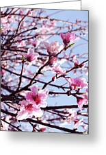 Peach Blossom Blowout Greeting Card by DiDi Higginbotham