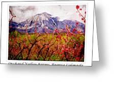 Peach Blossoms And Mount Lamborn Orchard Valley Farms Greeting Card