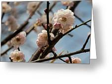 Peach Blossoms In Spring Greeting Card