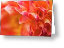 Peach Color Dahlia Greeting Card