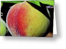 Peach Fuzz Greeting Card