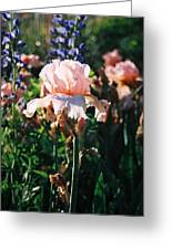 Peach Iris Greeting Card