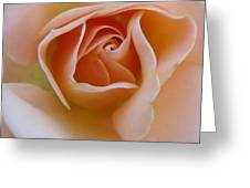 Peach Mini Rose Greeting Card