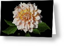 Peach-n-yellow Dahlia Cutout Greeting Card