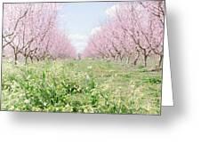 Peach Orchard 4 Greeting Card