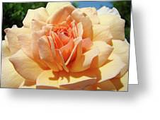 Peach Rose Art Prints Roses Flowers Giclee Prints Baslee Troutman Greeting Card