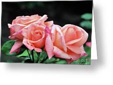 Peach Rosebud Trio Greeting Card