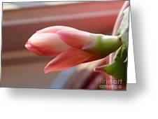 Peach Succulent Greeting Card