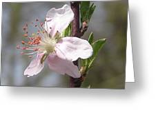 Peach Tree 2 Greeting Card