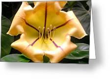 Peaches Vanilla Cinnamon Greeting Card