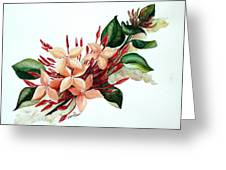 Peachy Ixora Greeting Card