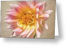 Peachy Pink Dahlia Close-up Greeting Card