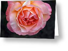 Peachy Rose Greeting Card