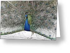 Peacock 03 Greeting Card