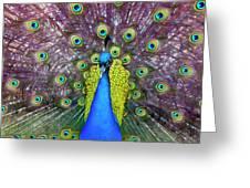 Peacock Art Greeting Card