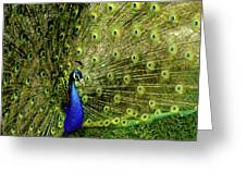 Peacock At Frankenmuth Michigan Greeting Card