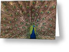 Peacock At The Fort Greeting Card
