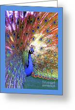Peacock Beauty Colorful Art Greeting Card