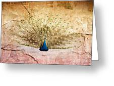 Peacock Bird Textured Background Greeting Card