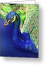 Peacock Blued Greeting Card