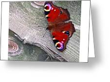 Peacock Butterfly Greeting Card