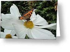 Peacock Butterfly On Cosmos Greeting Card