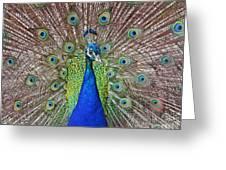 Peacock Displaying His Plumage Greeting Card