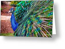 Peacock Blues Greeting Card
