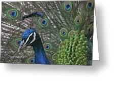 Peacock Enhanced Greeting Card
